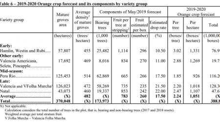 FruitNews: Урожай апельсинов в Бразилии вырастет на 36% и превысит 15 млн тонн - FruitNews.RU