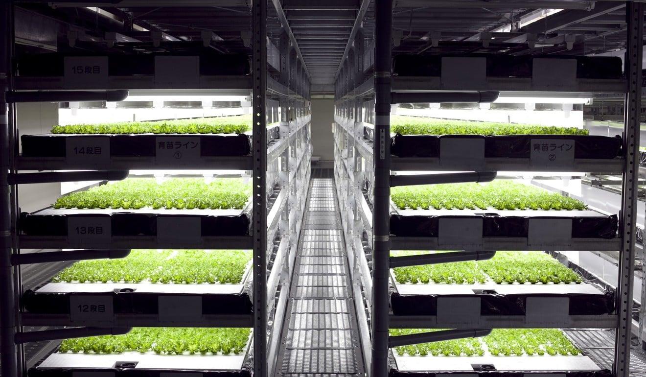 FruitNews: Крупнейшие компании Японии осваивают вертикальные теплицы | FruitNews.RU