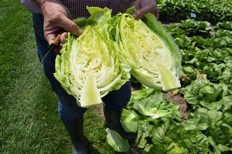 FruitNews: FruitNews.RU | В Голландии представили новые тренды рынка салатов