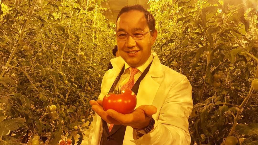 First_tomato.jpg