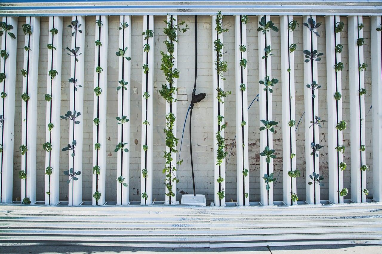 hydroponics-917285_1280.jpg