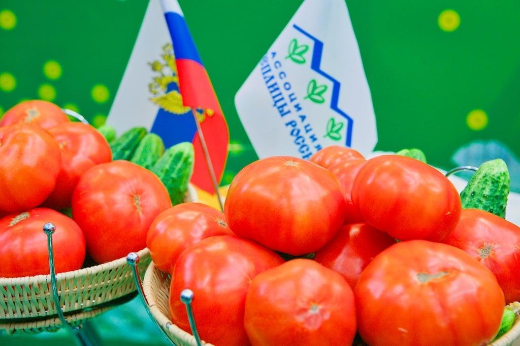 Томаты. Фото FruitNews.RU