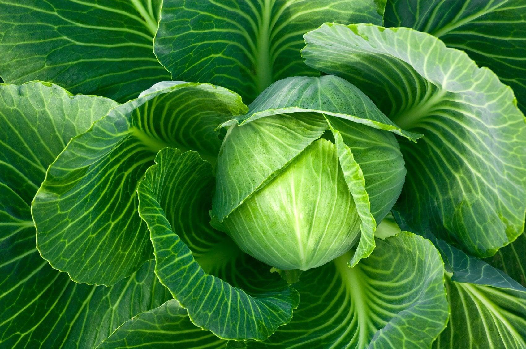 В Интерагро отметили необходимость обновления хранилищ для капусты и свеклы в стране