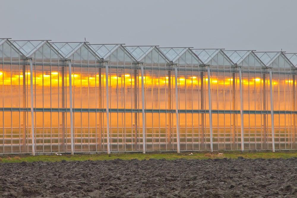 Япония предлагает России выращивать тепличные томаты на Курилах