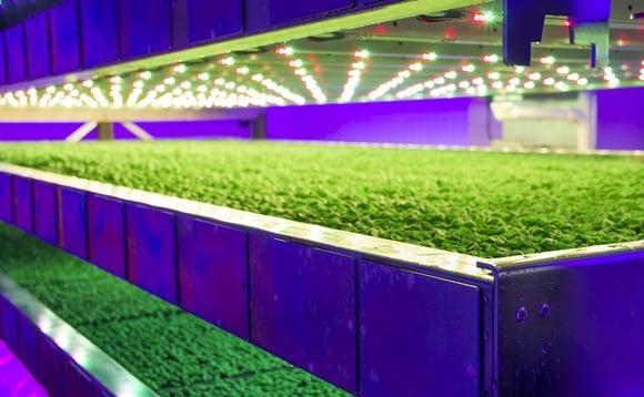 Шотландская вертикальная ферма будет экономить 50% затрат на электроэнергию и 80% на рабочую силу