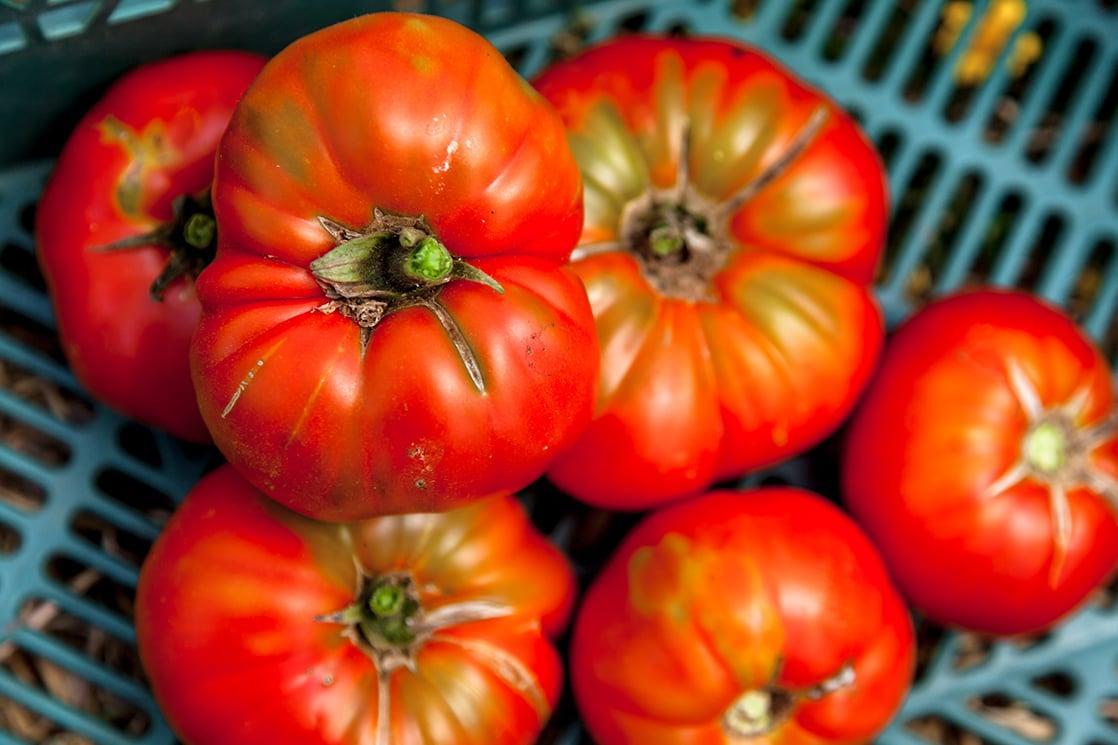 Ученые Аргентины приступили к воссозданию томатов с традиционным вкусом