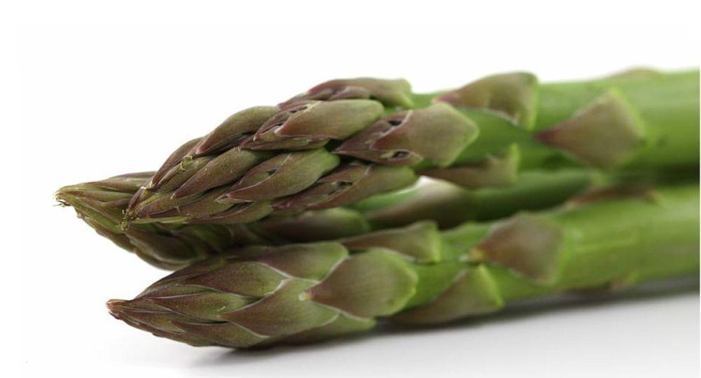 Global Plant Genetics вывела на рынок сорт спаржи Pacific Green - FruitNews.RU
