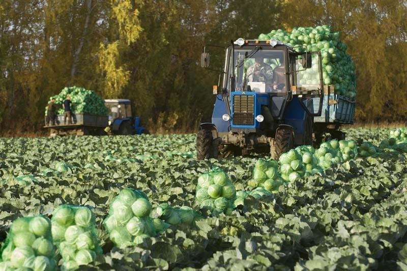 наличии работа в лен обл сельськое хозяйство Павла Бажова самое