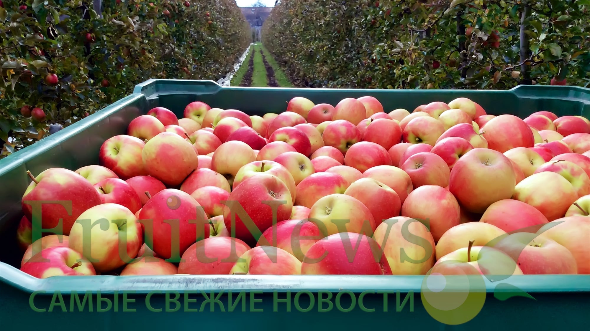 FruitNews: FruitNews.RU | Interpoma 2016 (Экскурсия в сад)