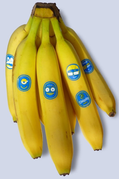 chiquita banana case Chiquita brands international november 9, 2011 1how strong chiquita bananas was before the trade war began chiquita bananas (and its predecesso.