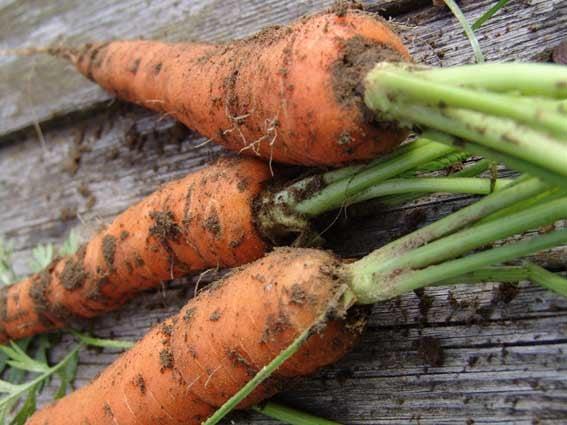 Немытые овощи и фрукты нельзя есть при беременности