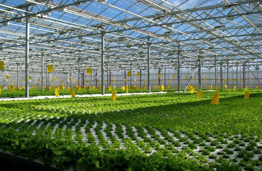 Выращивание овощей на предприятии 321