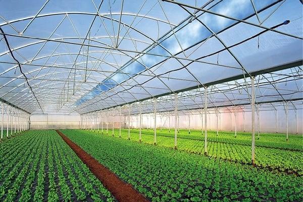 Выращивание на защищенных грунтах 585