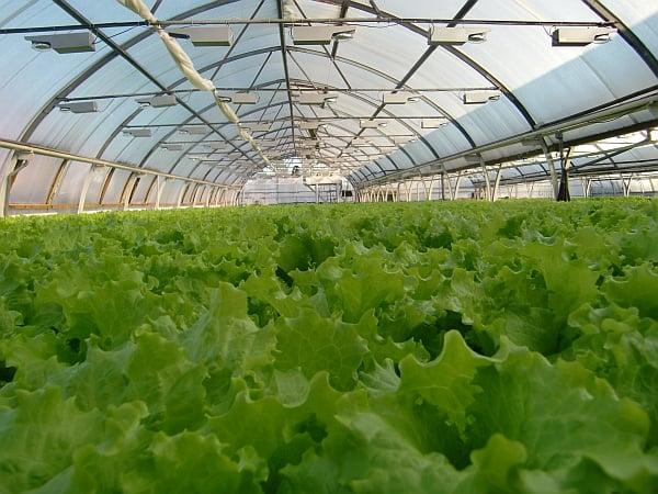 Род теплицы для выращивания овощей плодов и ранней зелени 78